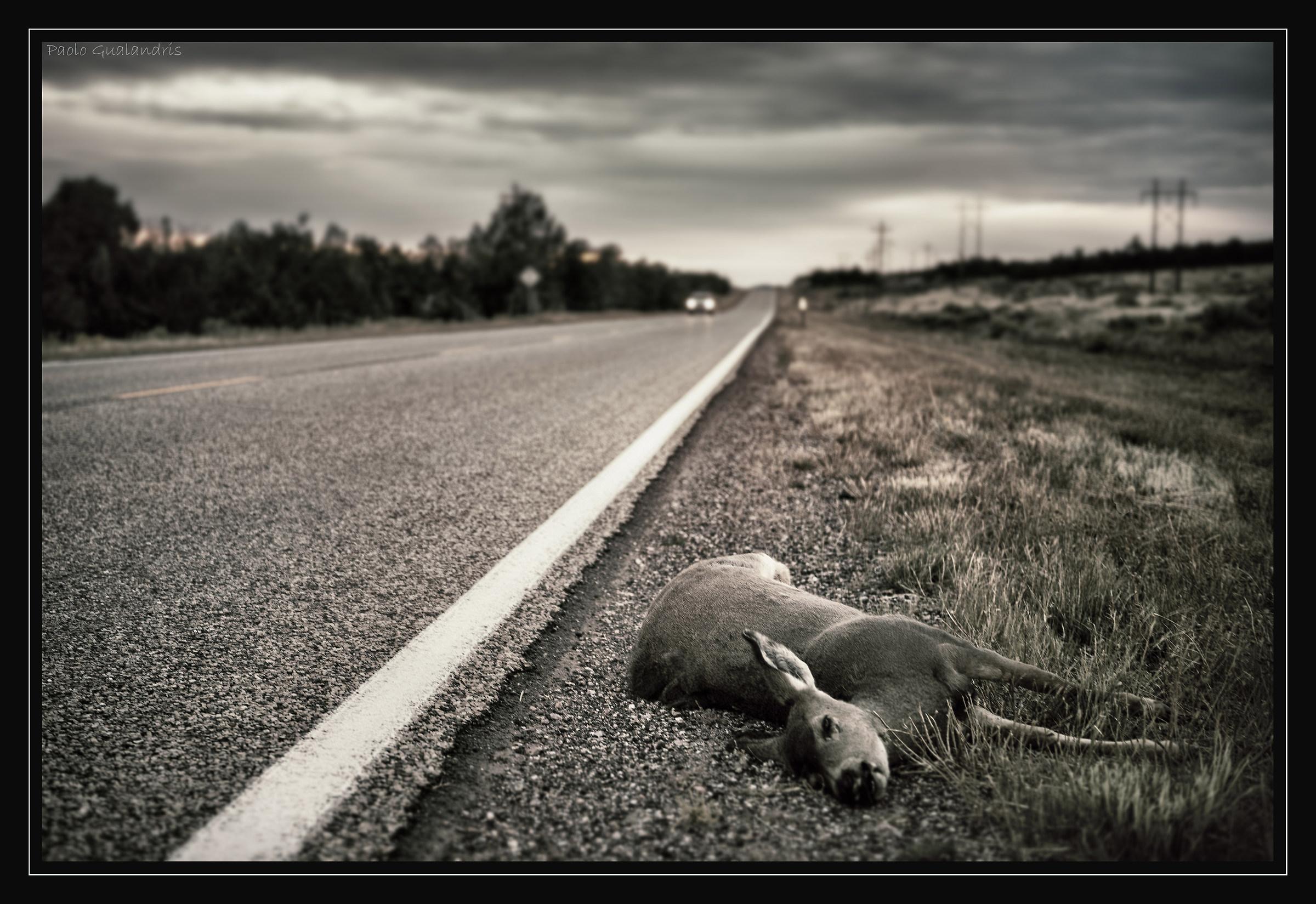 Deadly Roads...
