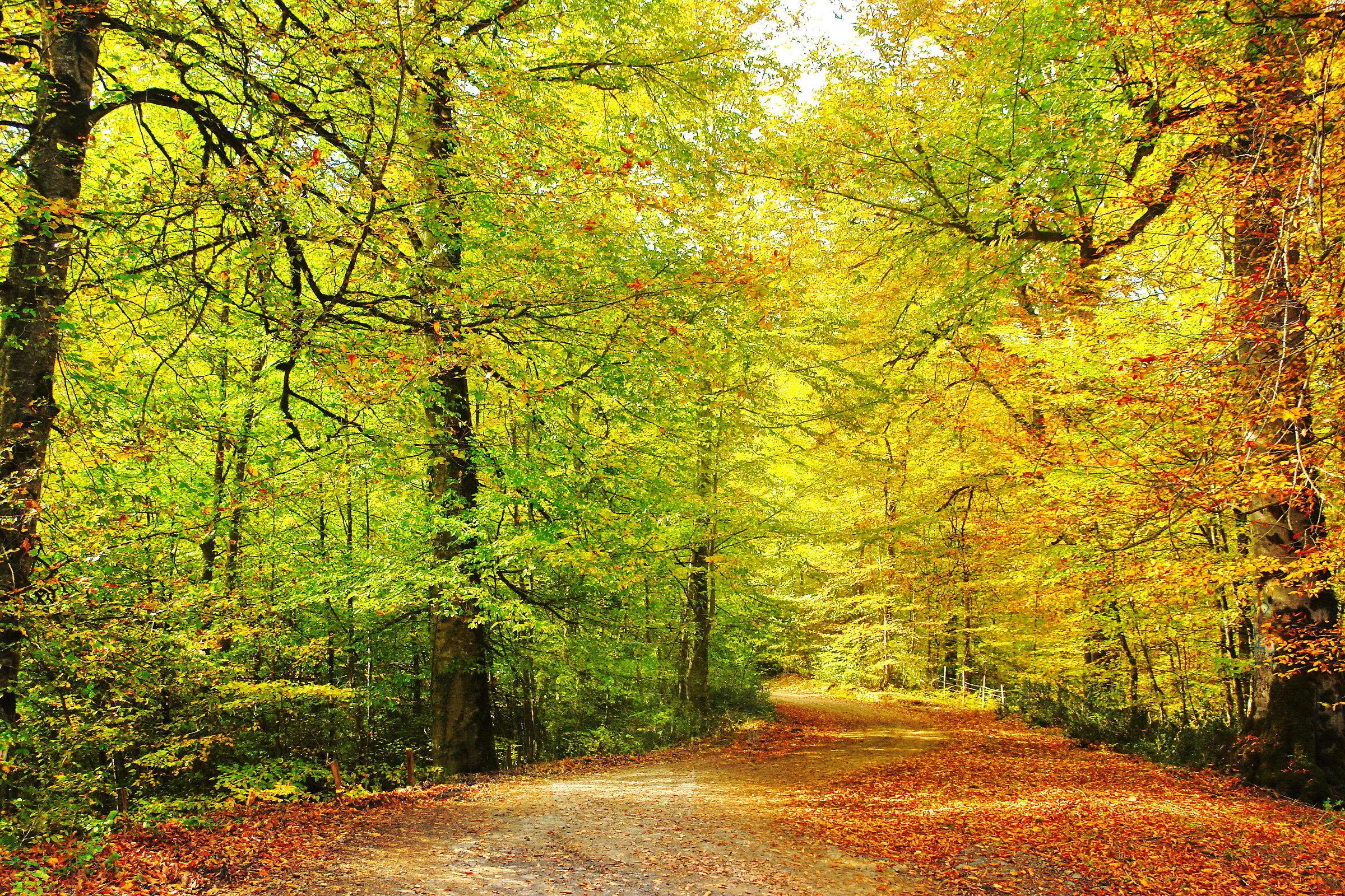 golden path-2...