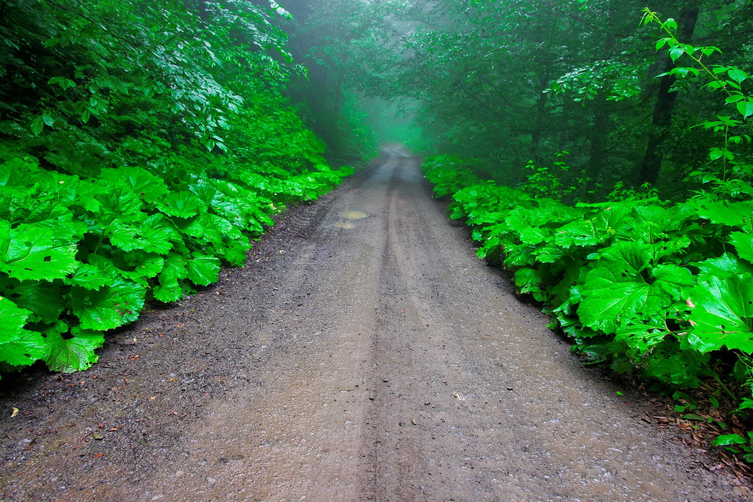 Green road...