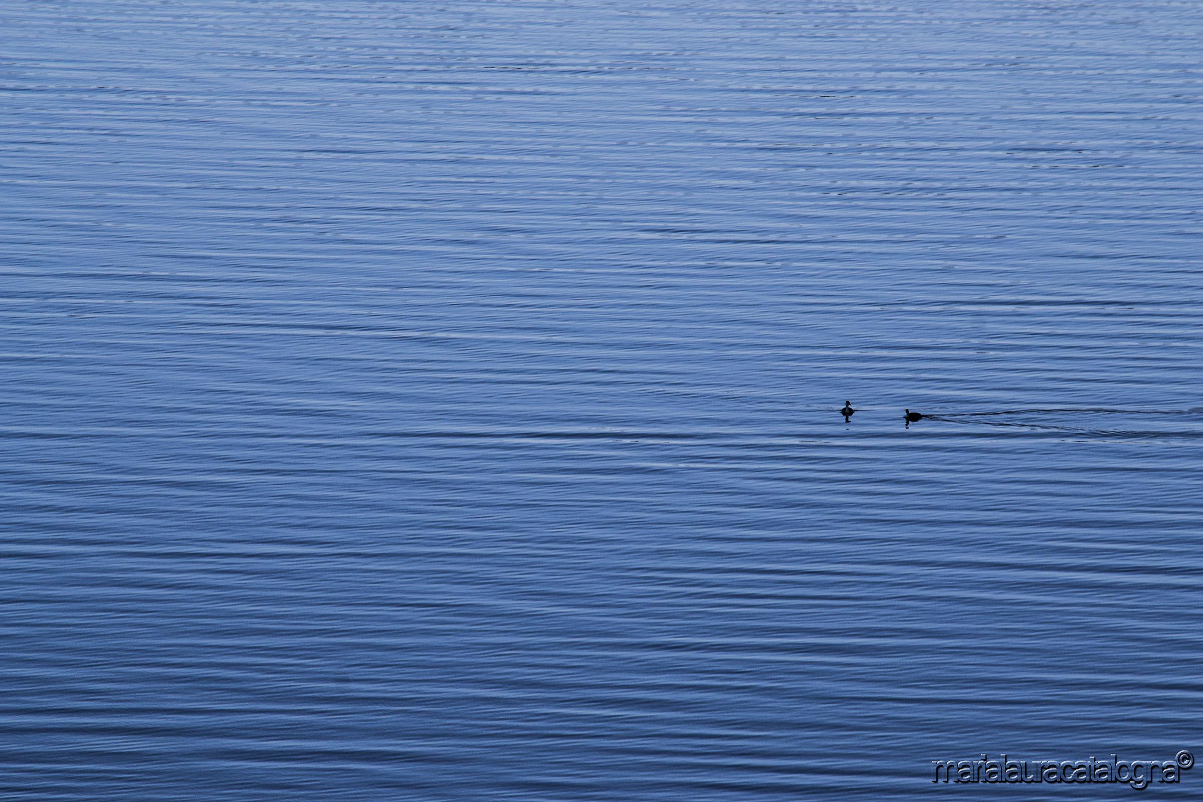 Meetings at Lake Campotosto...