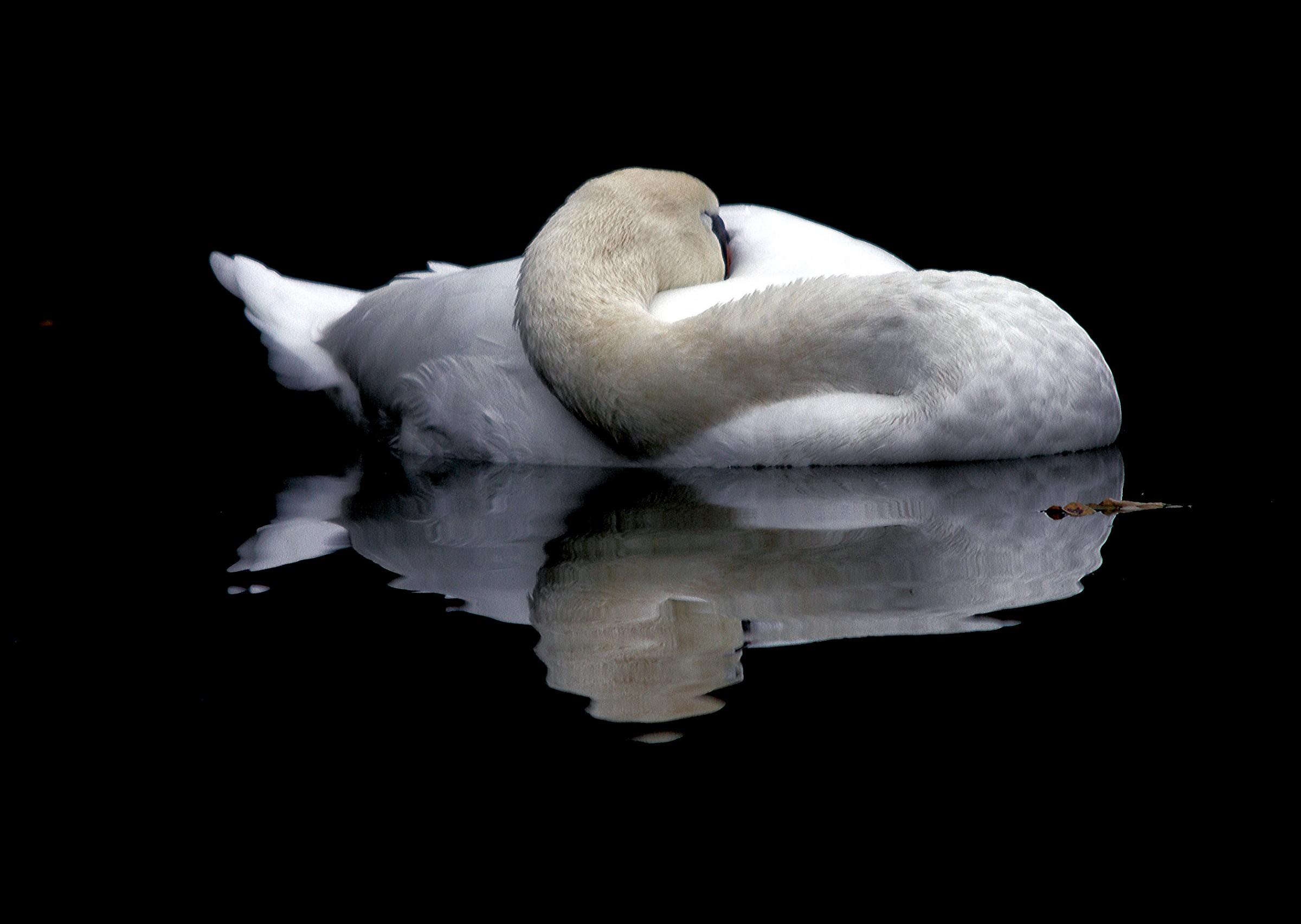 White rest...