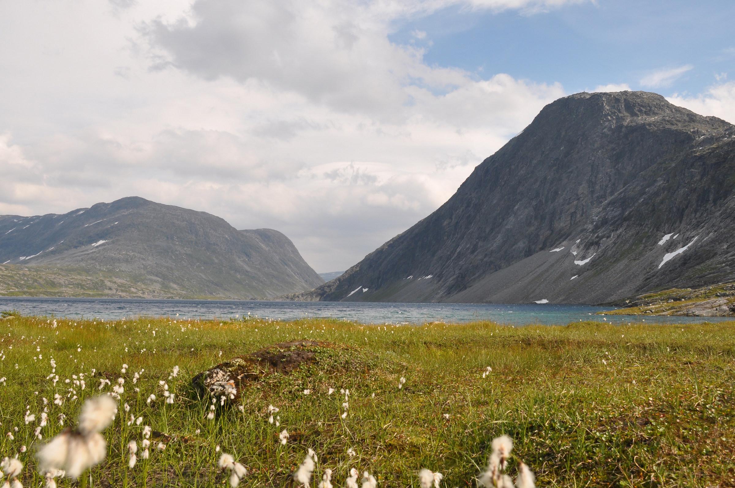Sticks ... (Norwegian landscape)...