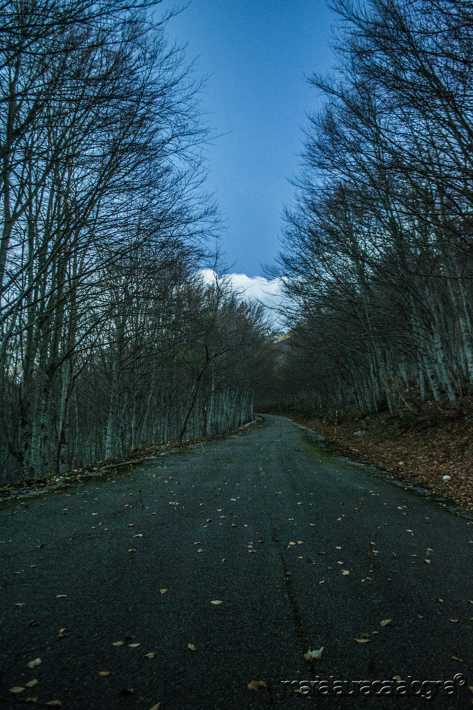 Avenue of leafless trees and leaves on the ground...