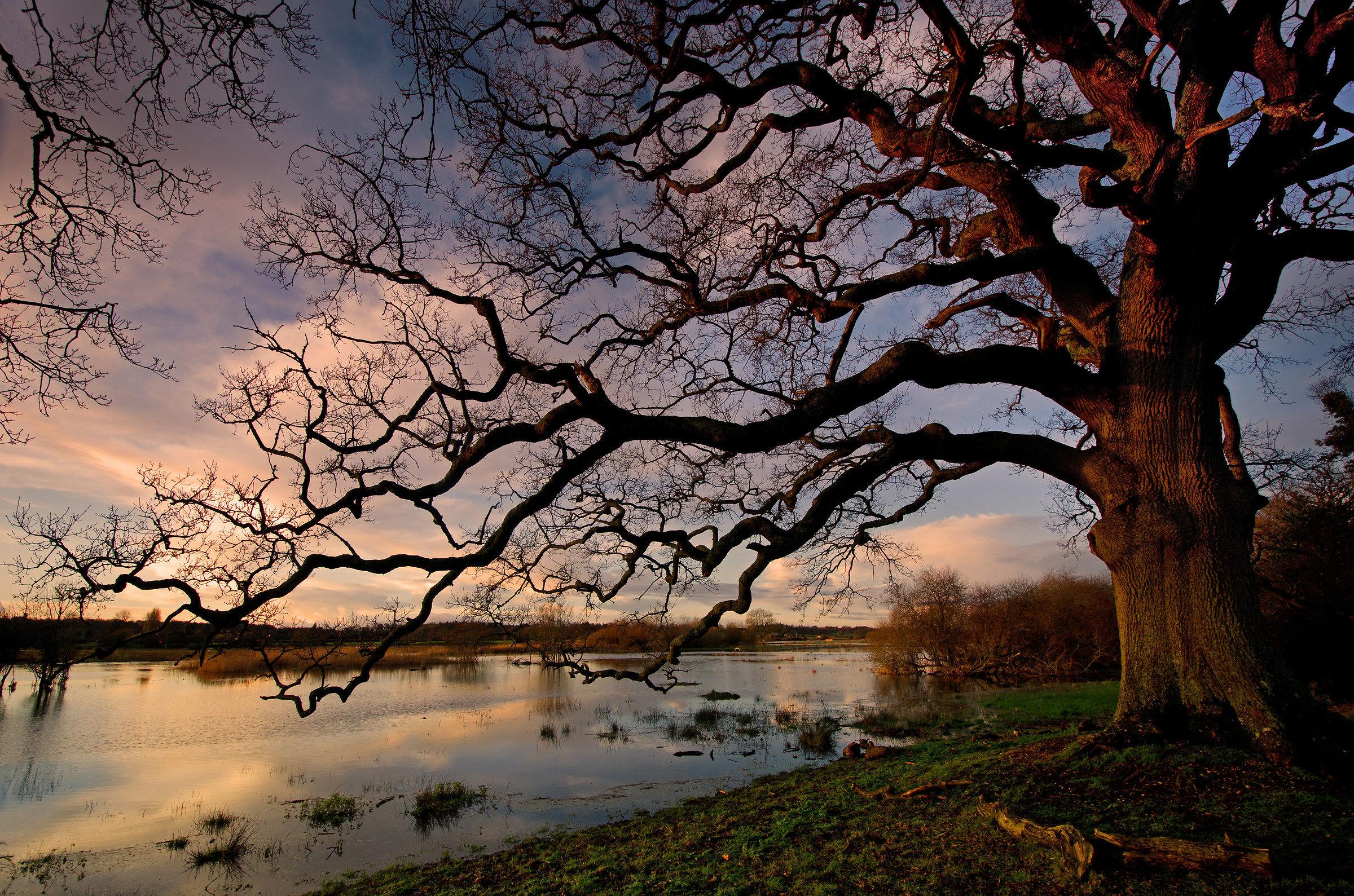 Che Big Oak (A Avon Flooded)...