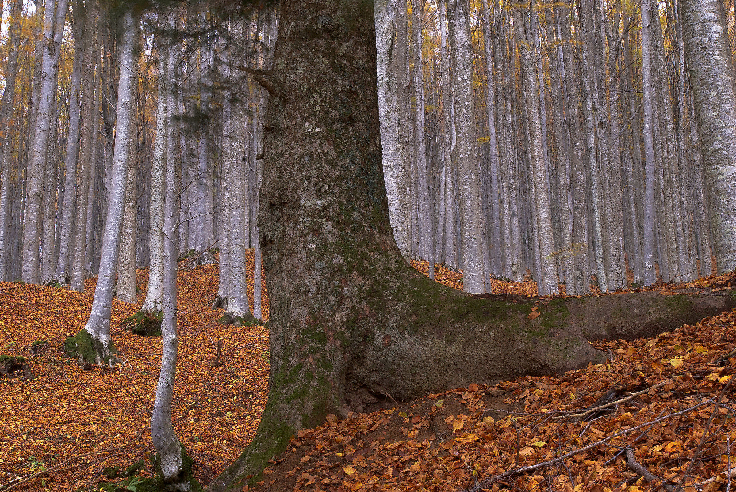 our forests 2...