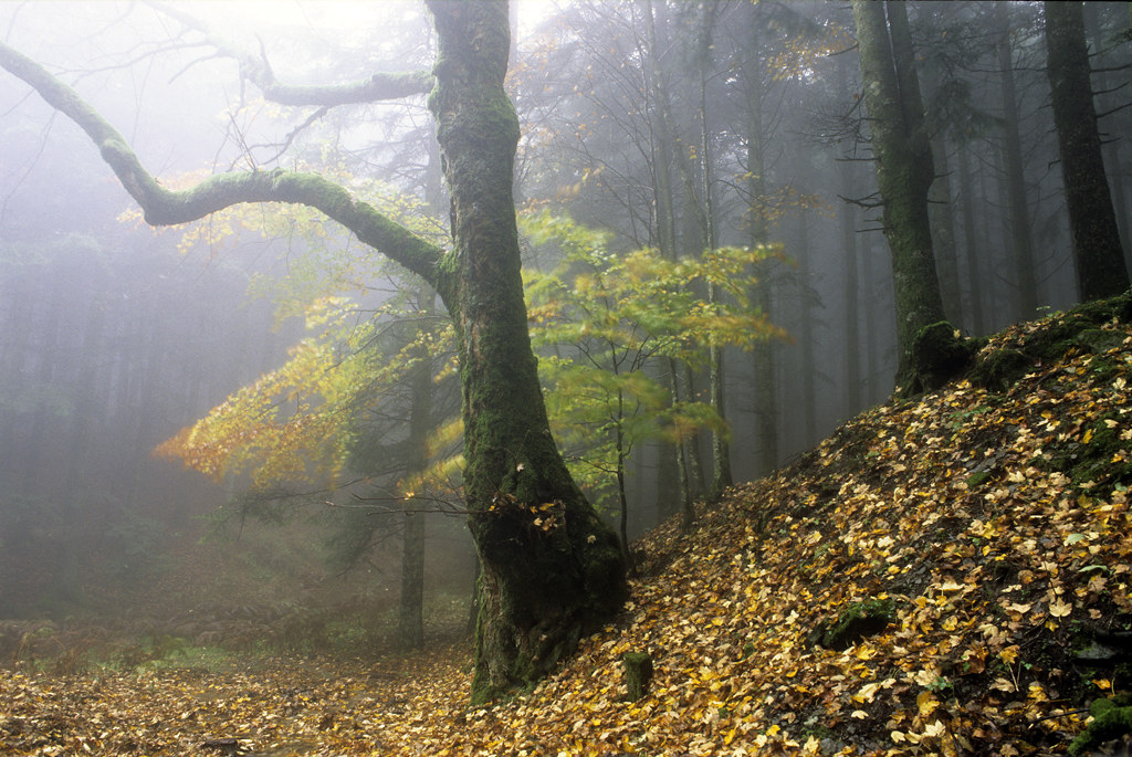 our forests 5...