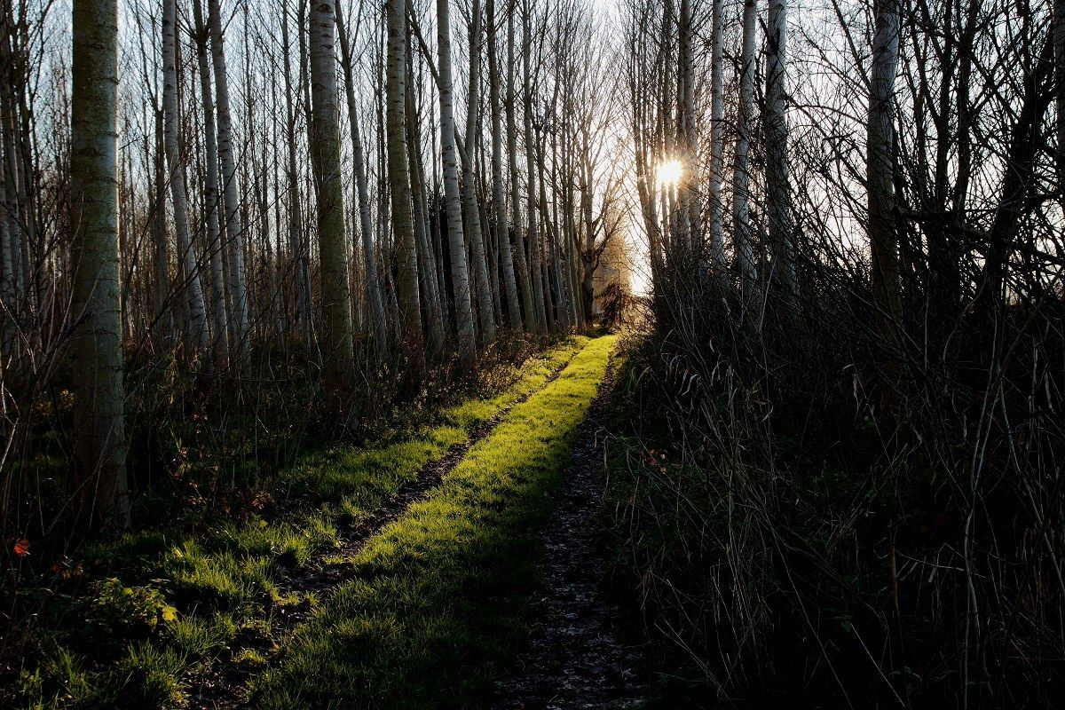 The light on the path...