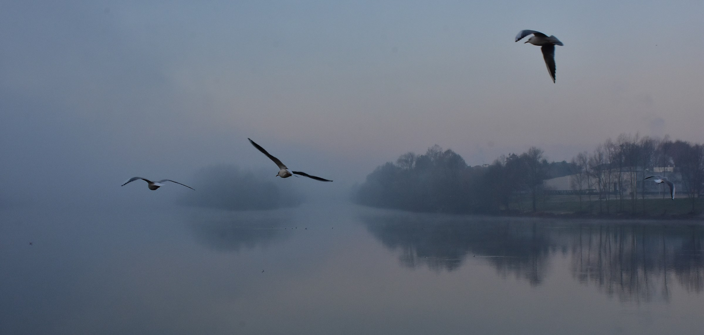 river and fog...