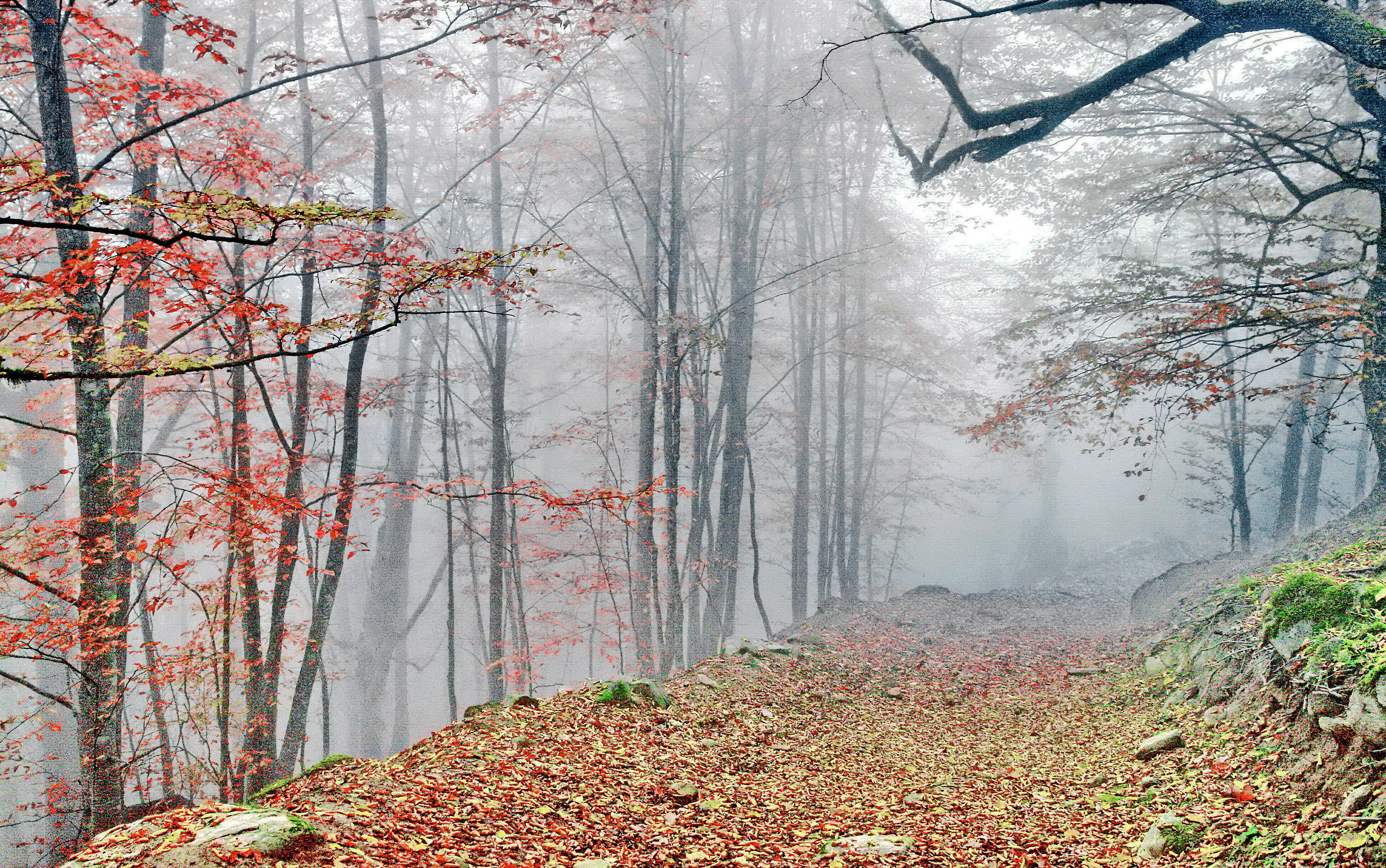 Fall and the fog...