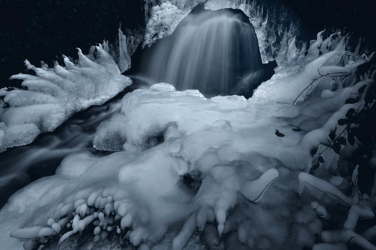 Tentacles winter...