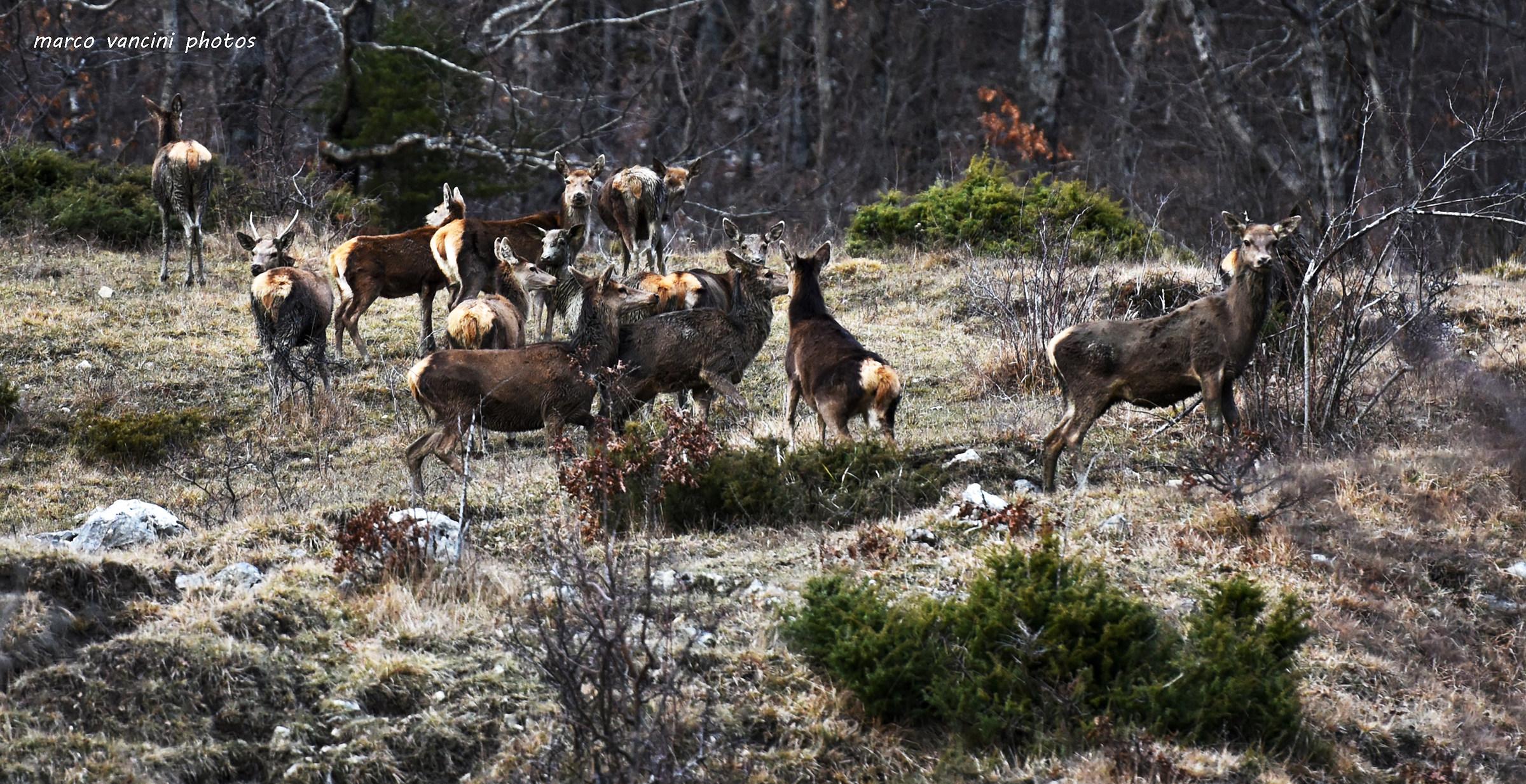 Deer grazing...