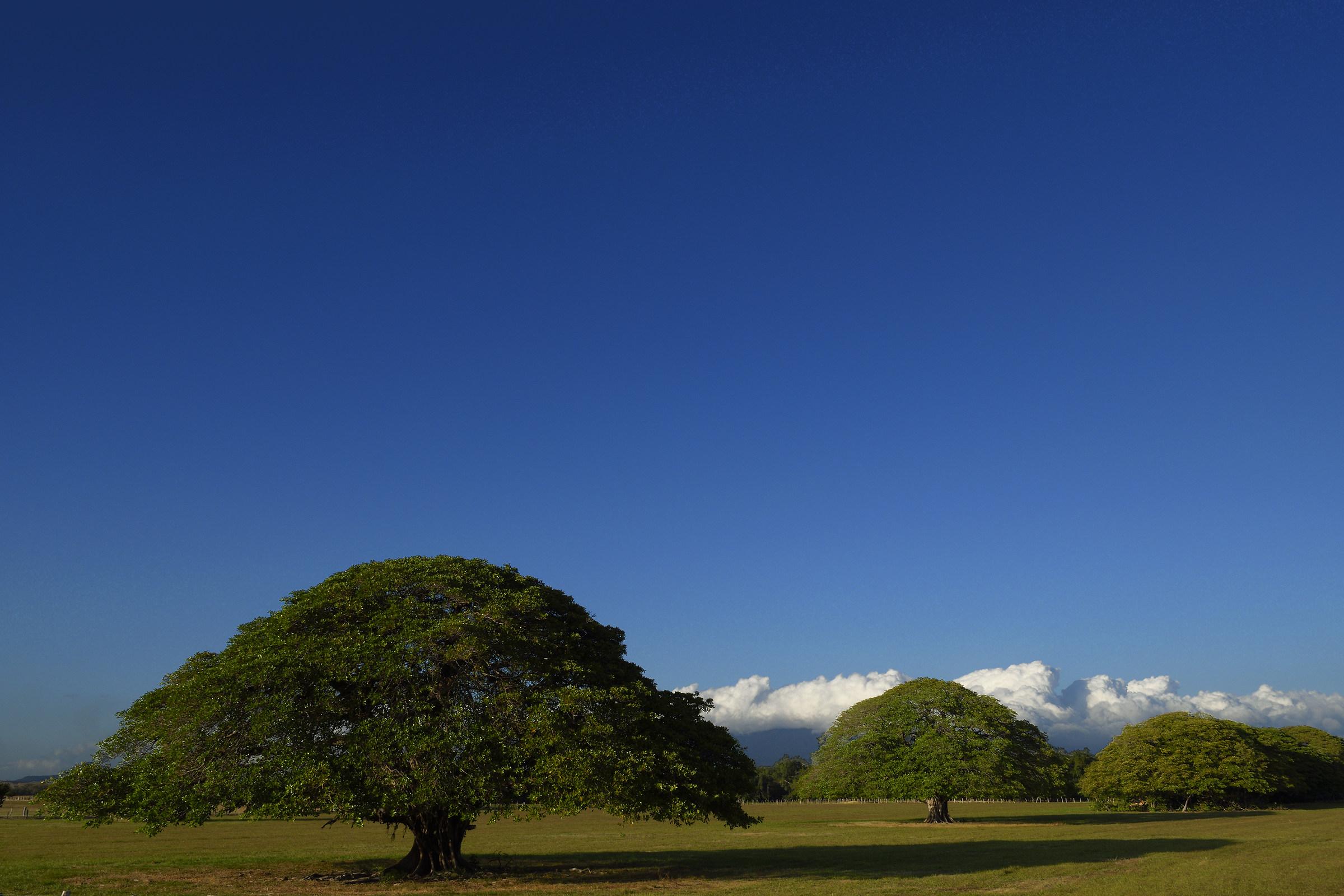 The three Guanacaste (Costa Rica)...