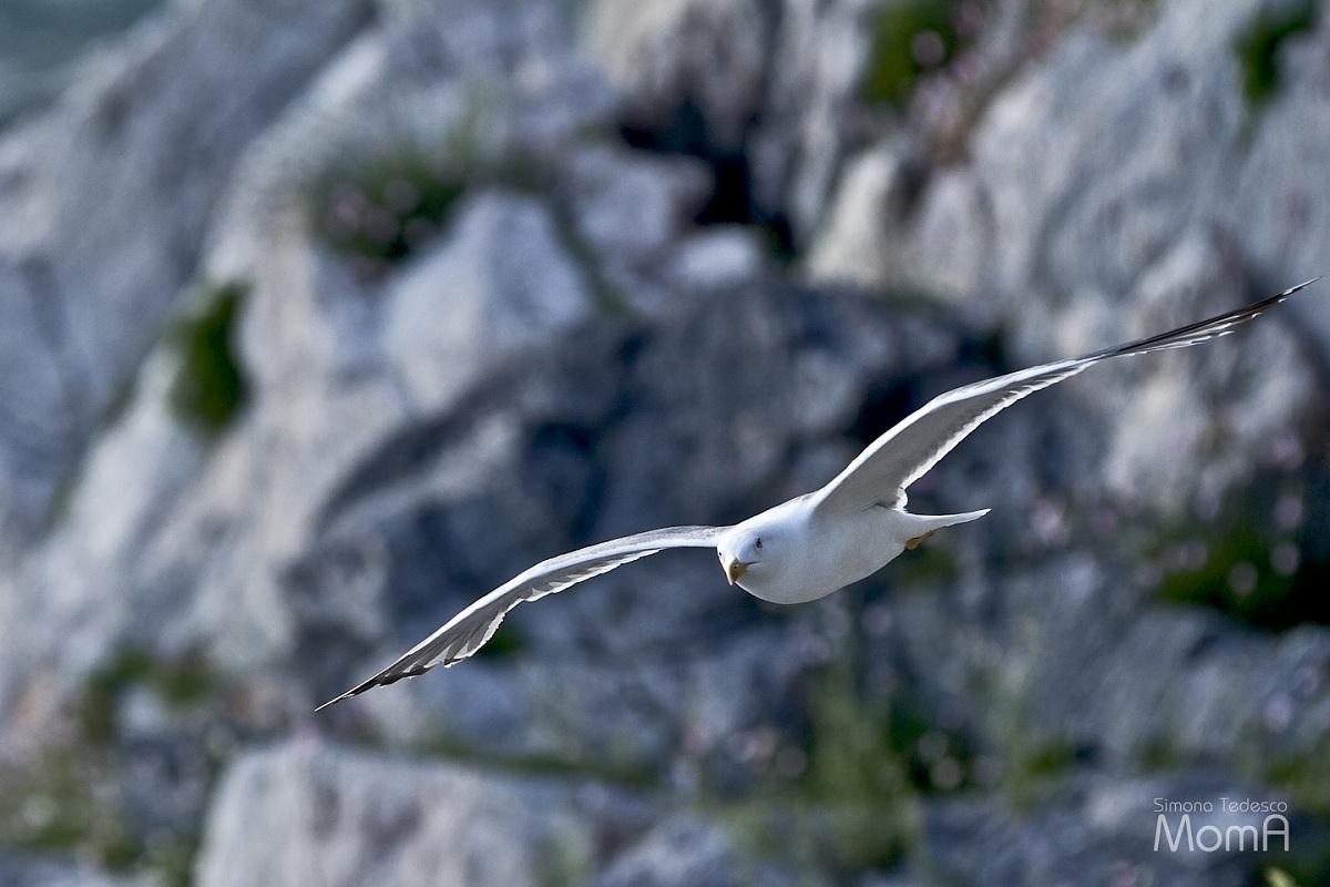 Gull...