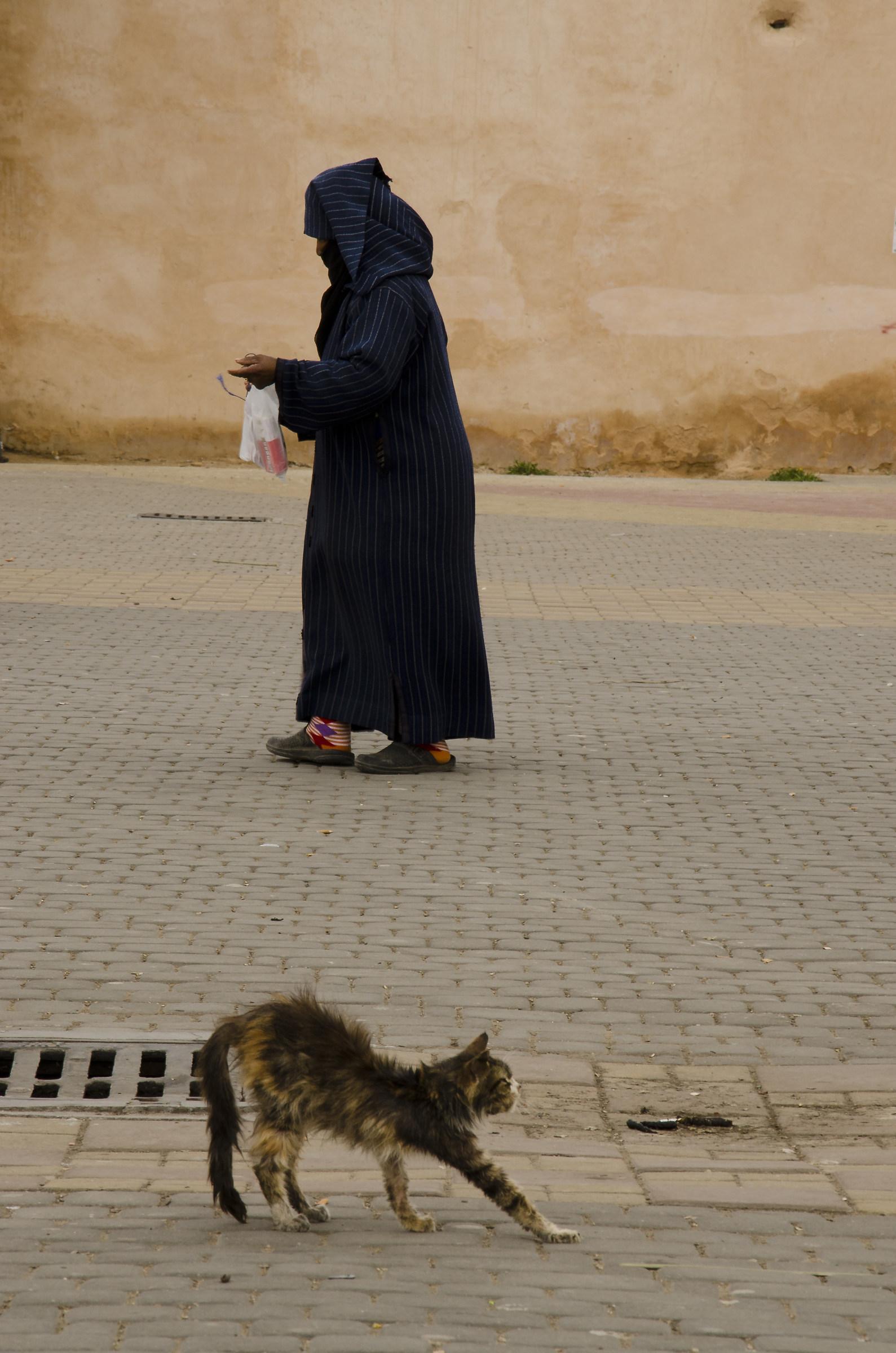 Meknes: la Donna ed il Gatto, strade parallele...