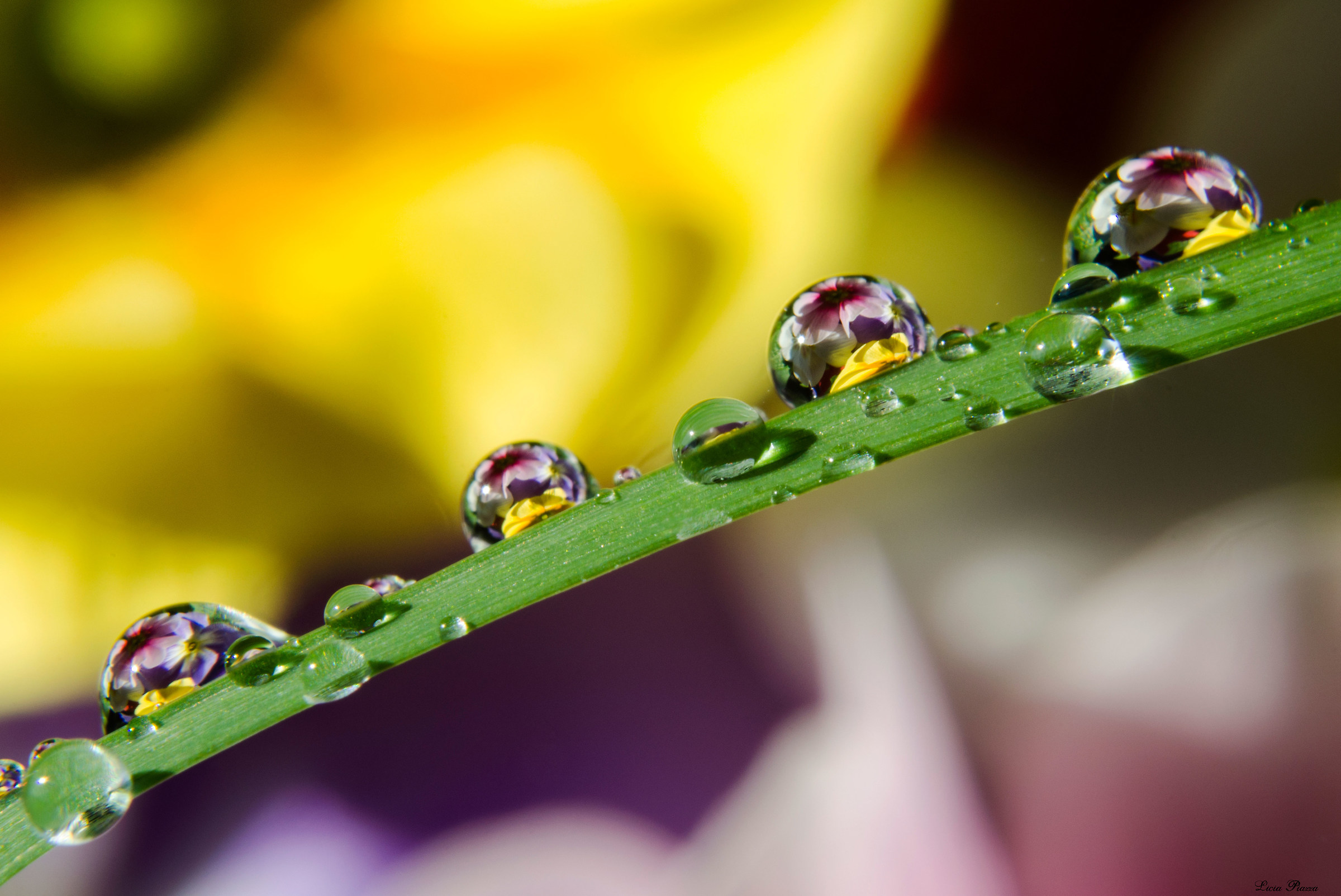 Drops and flowers...