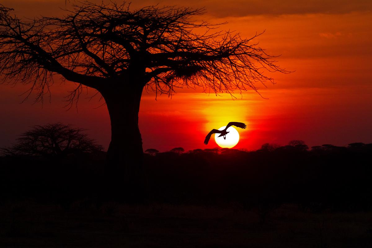 Risultati immagini per savana tramonto