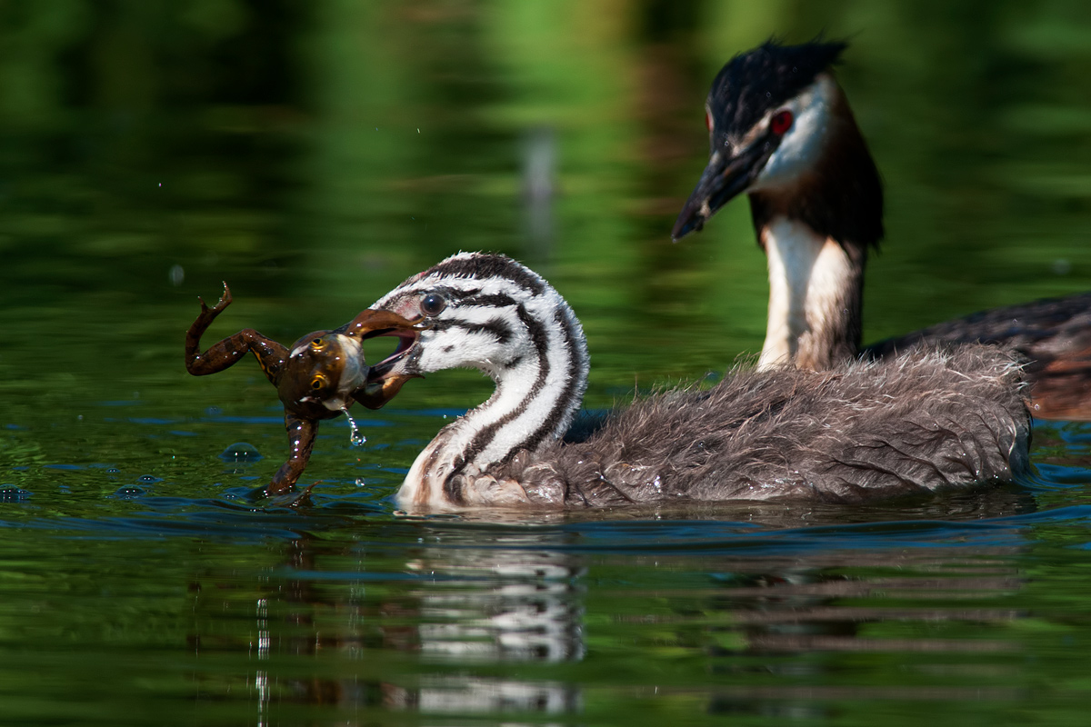 Education and experience (Grebe)...
