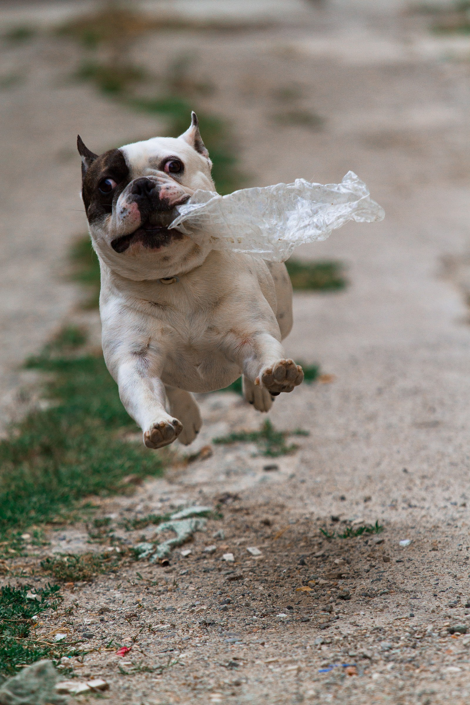 superdog...