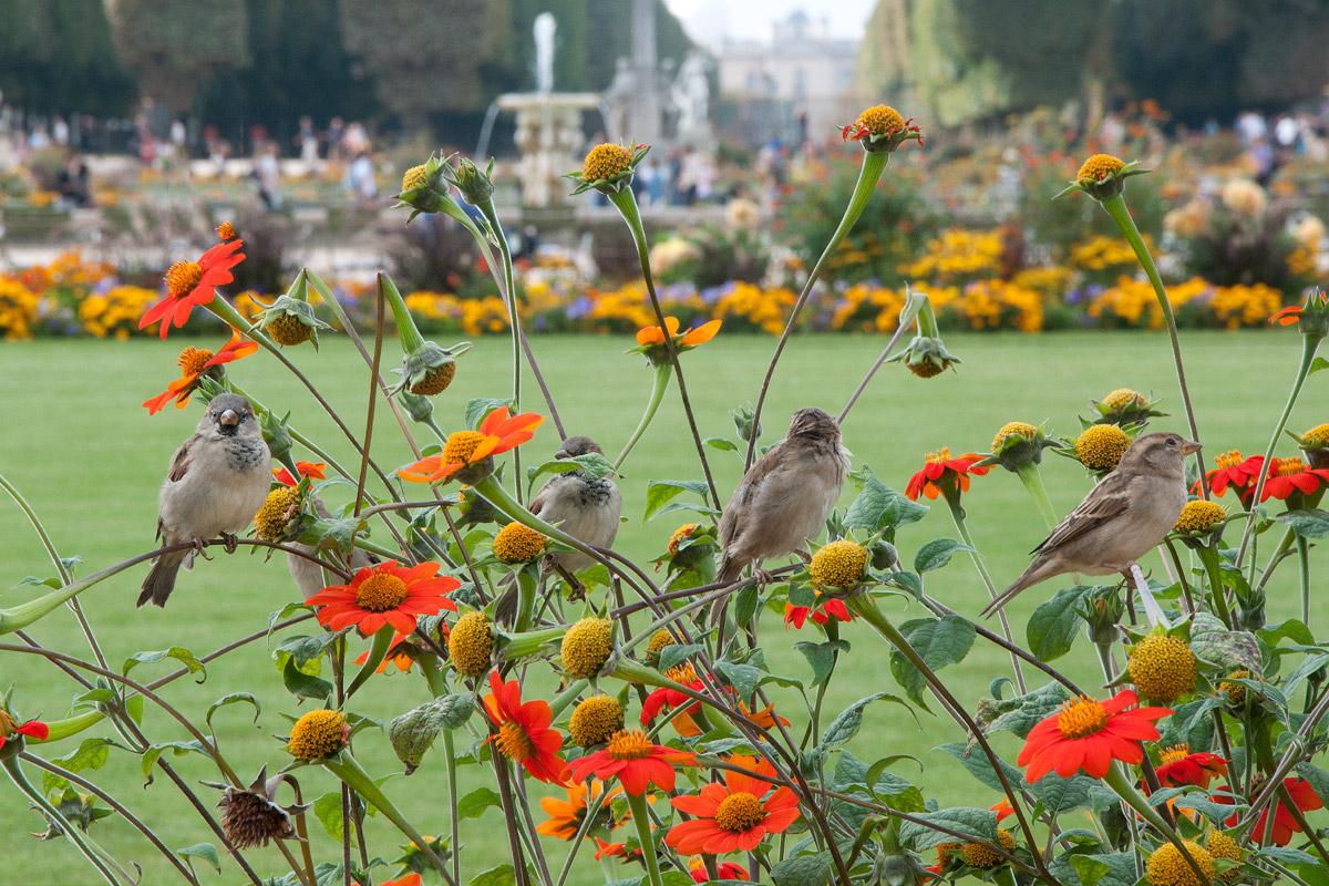 Jardin du Luxembourg - Paris...