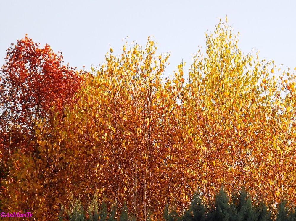 L'oro delle foglie...