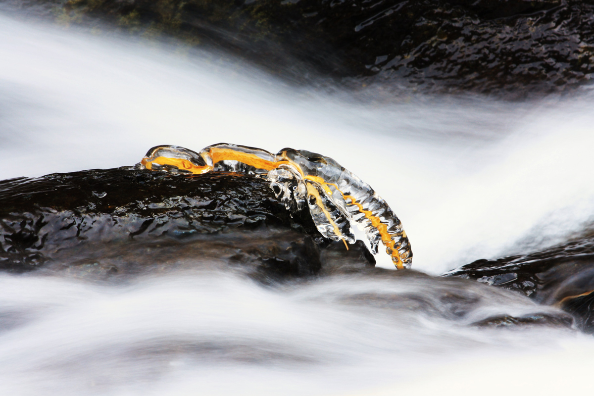 serpente.....di ghiaccio...