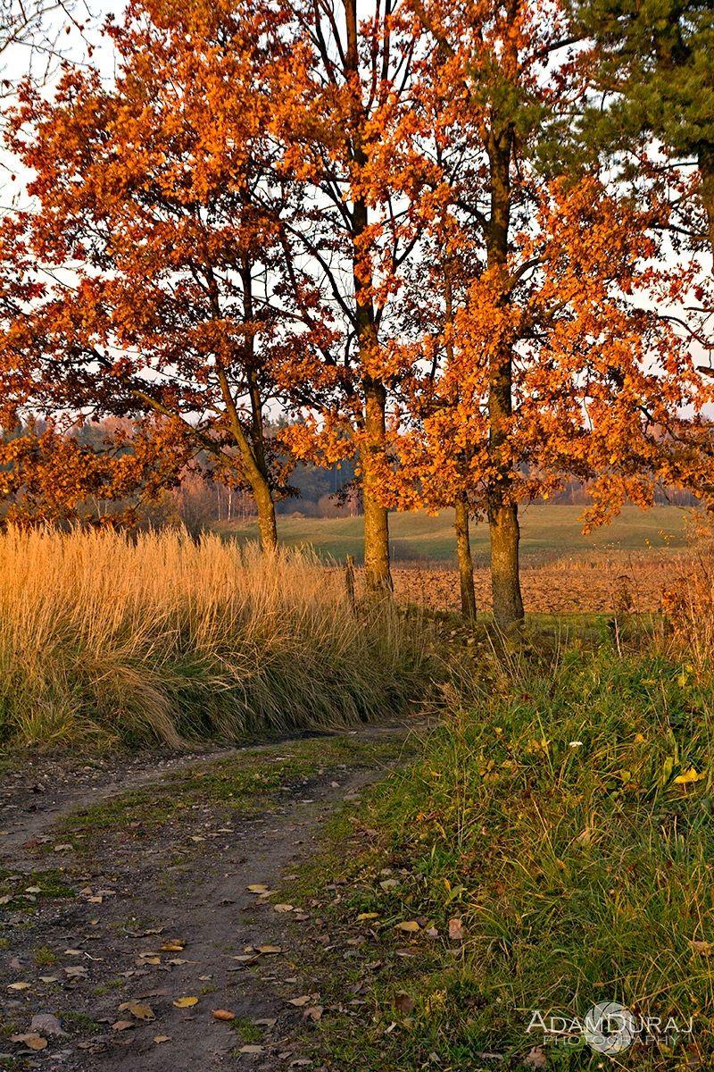 Autumn turn...
