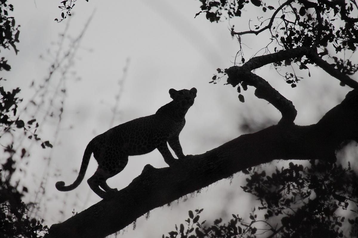 ambush at dawn...