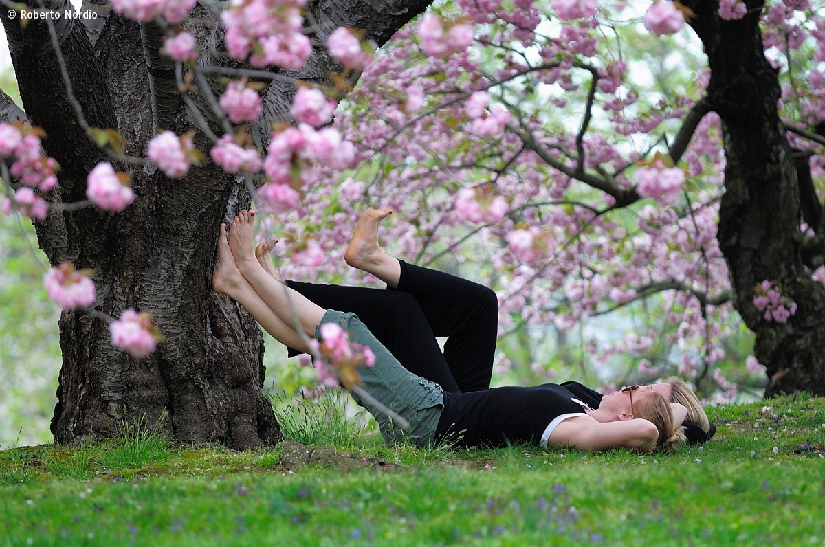 Relax at Bronx Botanical Garden...