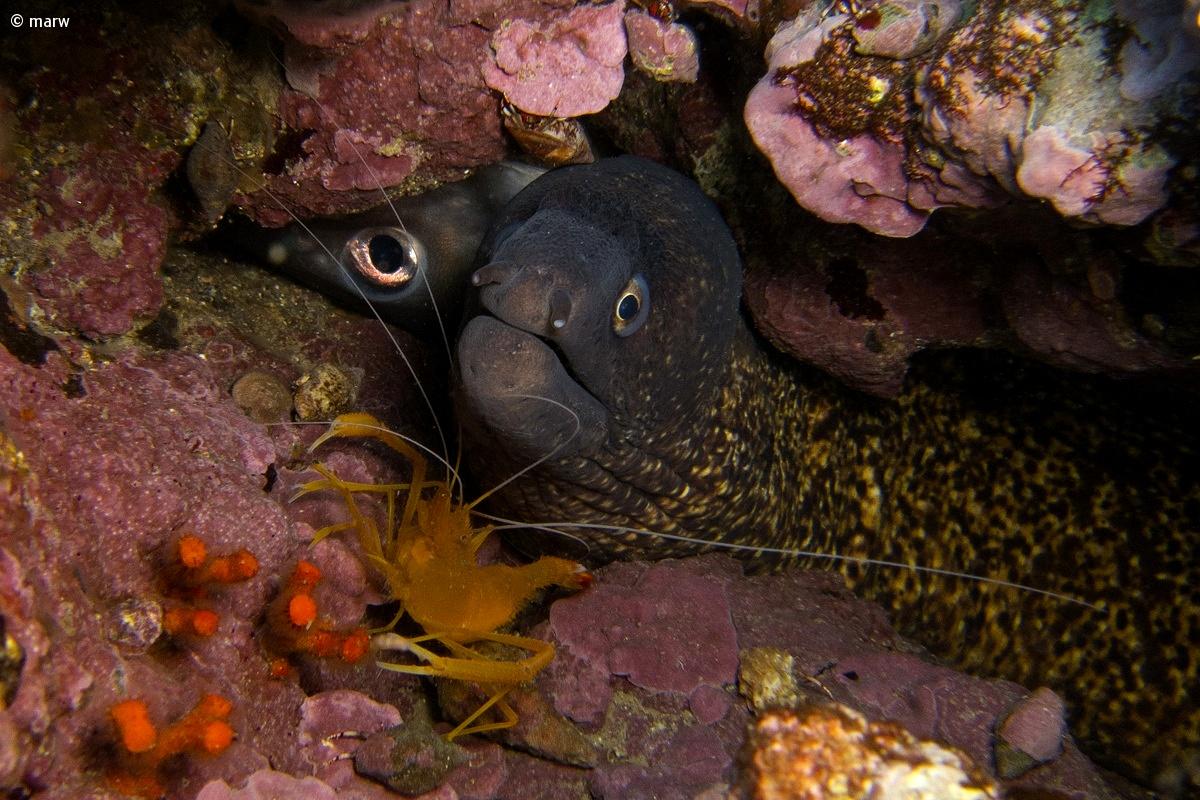 happy family (moray eel, red alifantozza)...