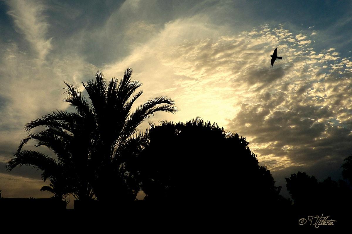 Sunset in Port El Kantaoui (Tunisia)...