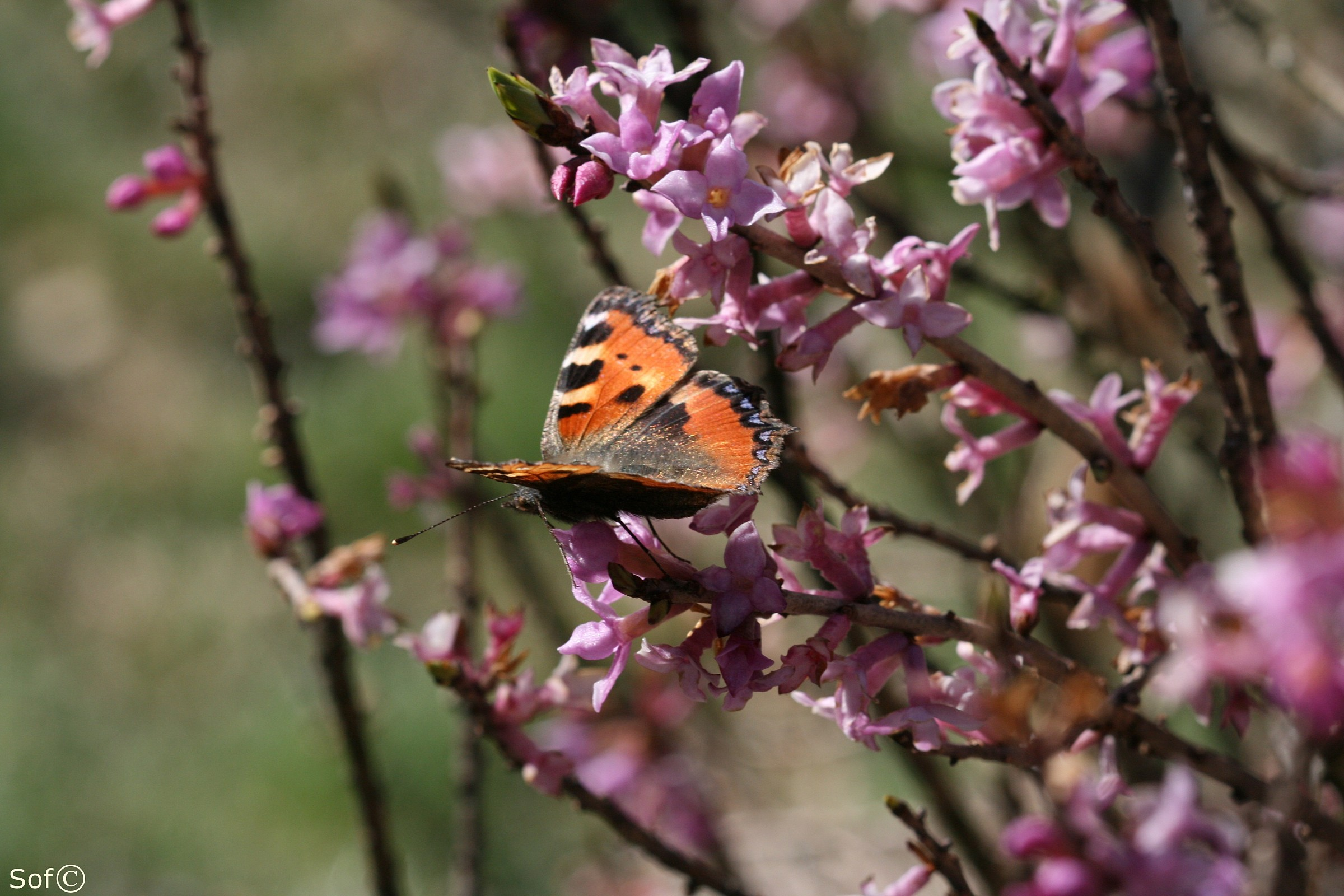 Butterfly I...