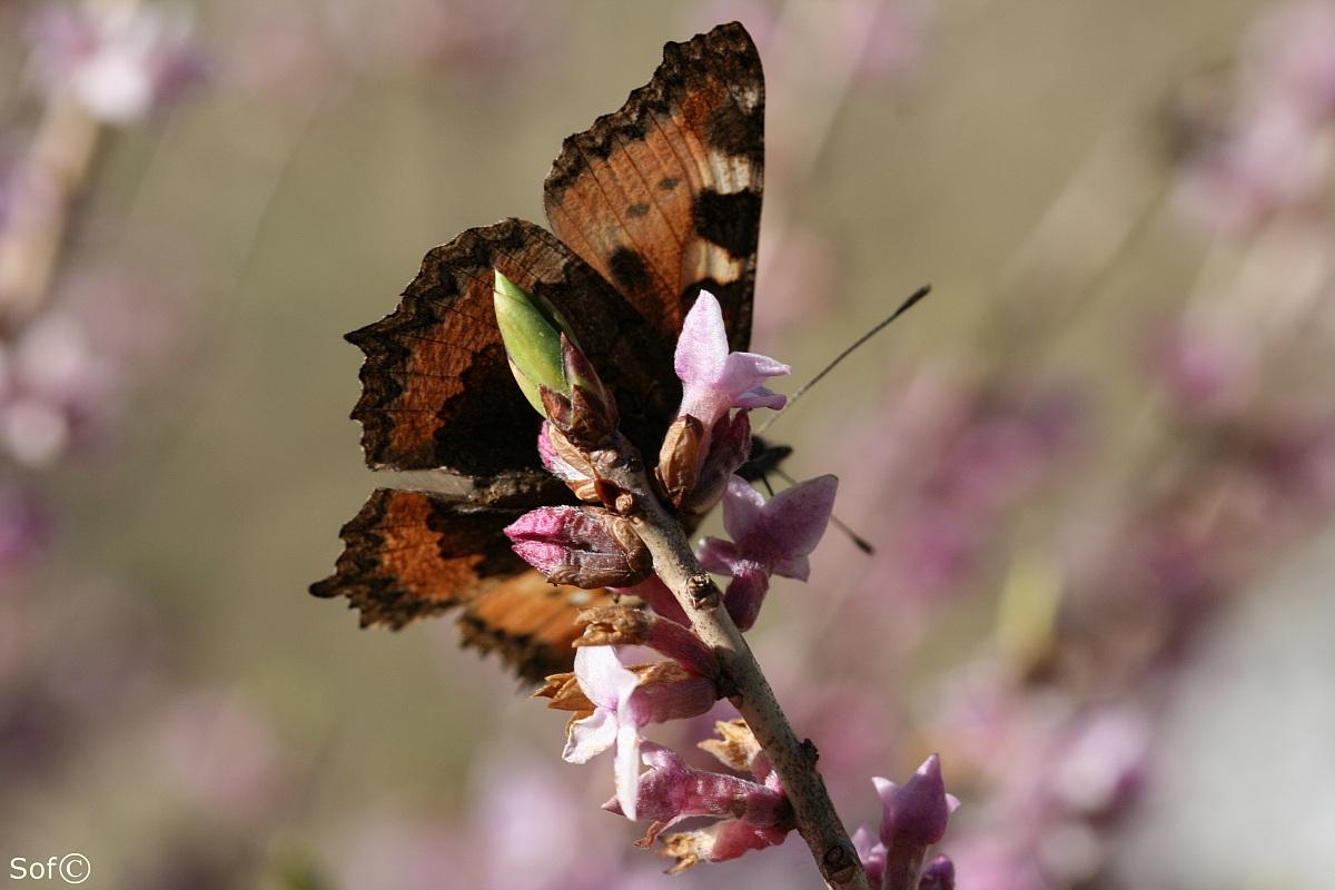Butterfly II...