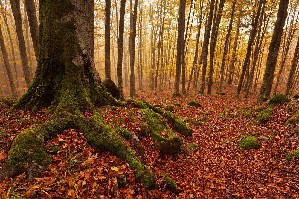 Foreste Casentinesi...