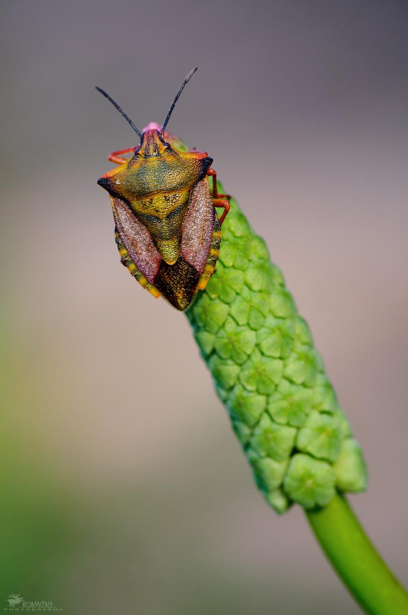 Colorful bug...