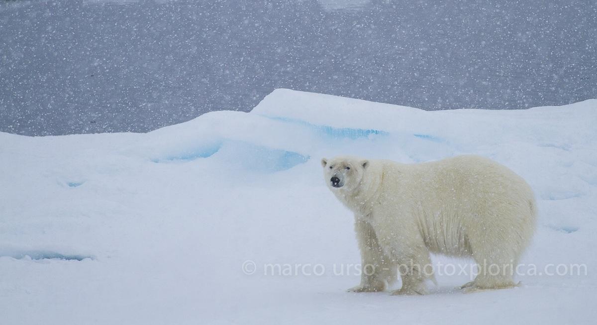 Isole Svalbard...