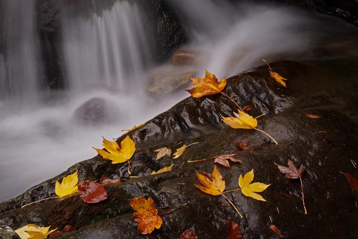 Autumn Colors ......