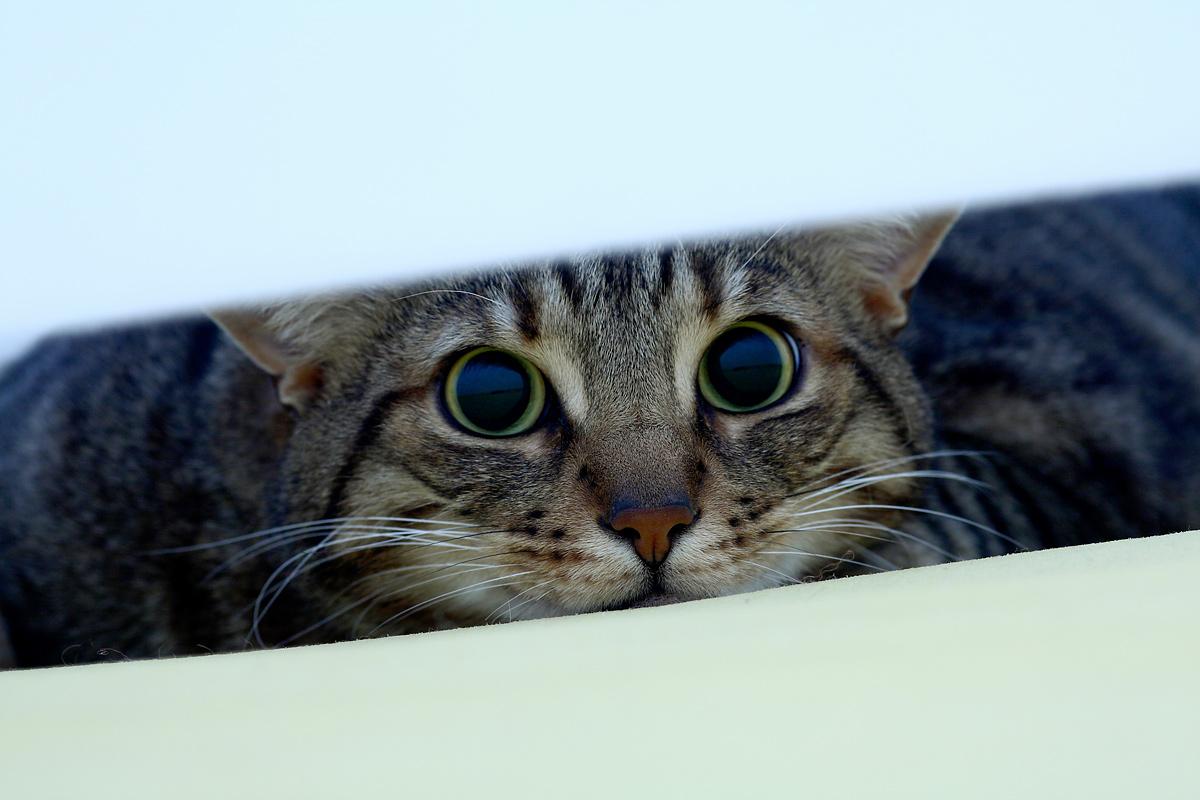 Sotto le lenzuola...