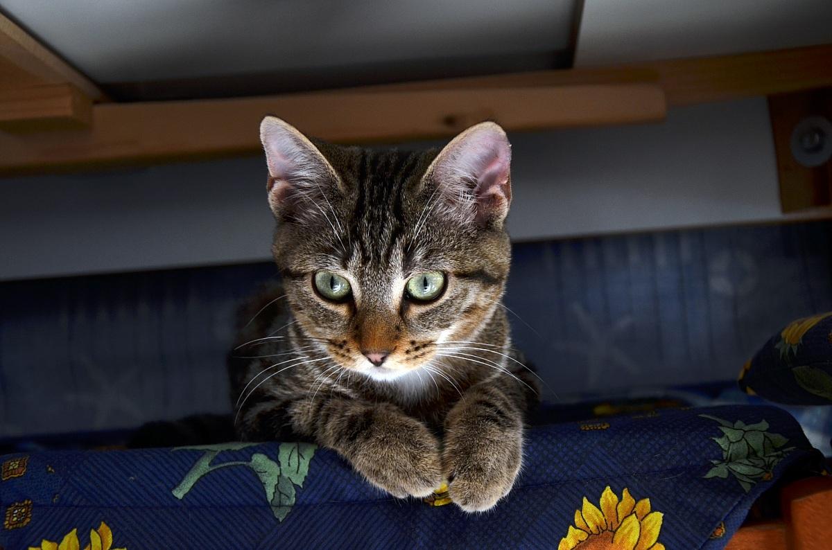 Sotto il tavolo juzaphoto - Cosce aperte sotto il tavolo ...