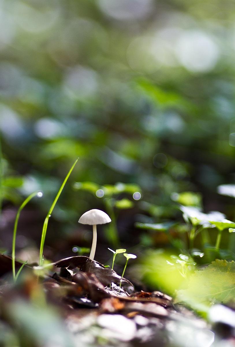 Undergrowth Umbrian...