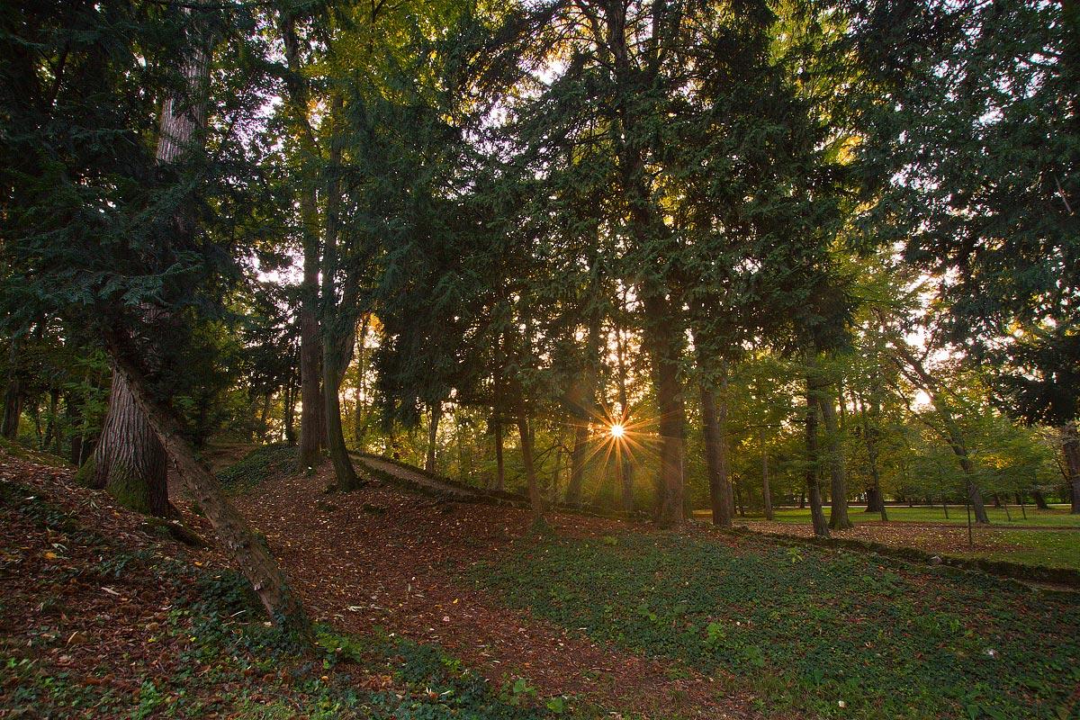 Il sole tra gli alberi...