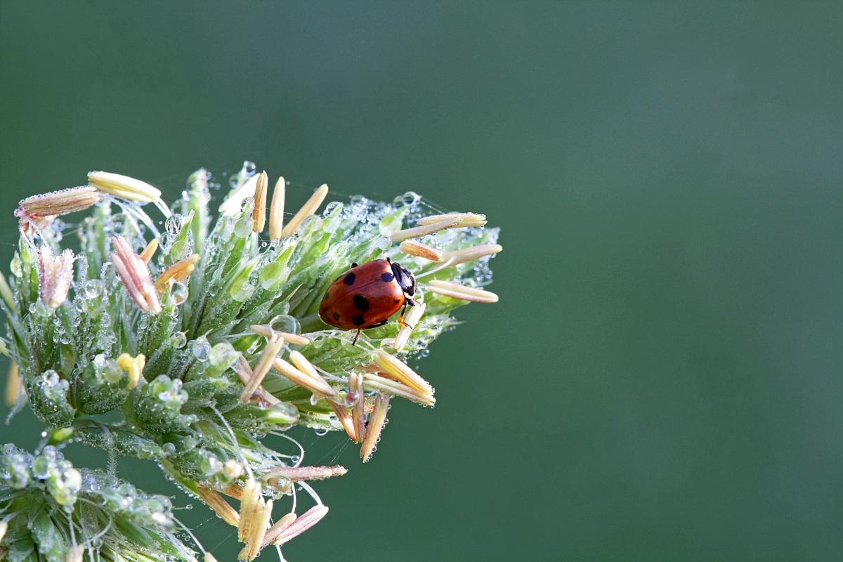 The last ladybug before winter...