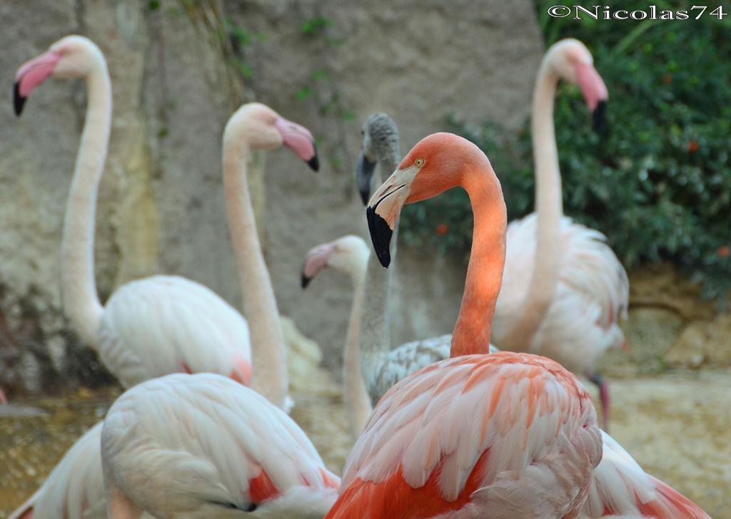 Pink Flamingos...