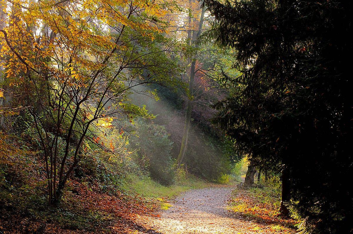 L'autunno...