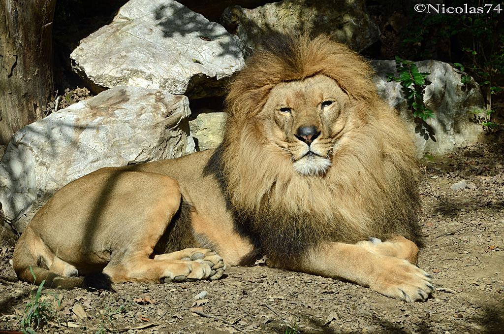 "Leo the ""King""..."