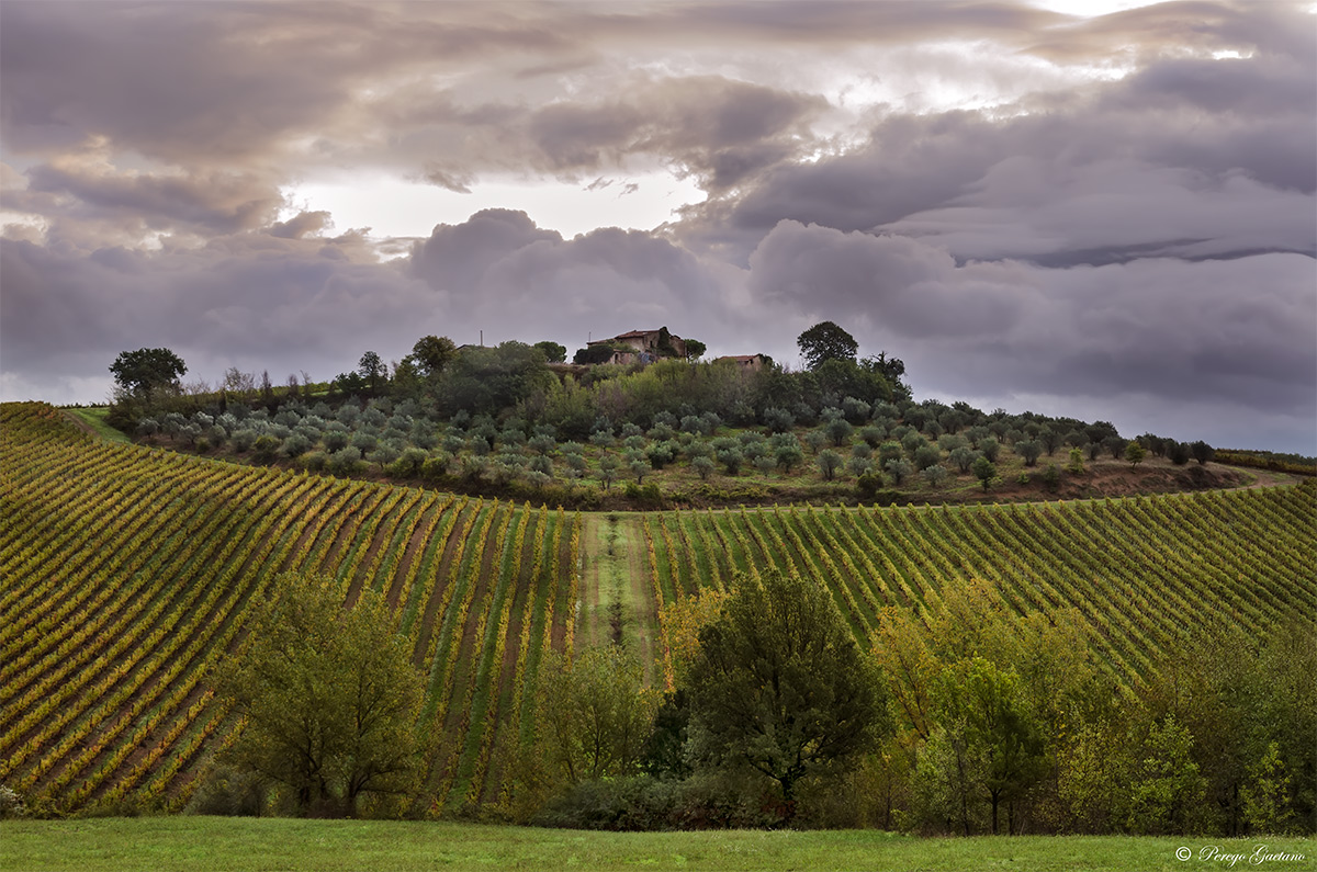 Umbrian olive groves and vineyards...
