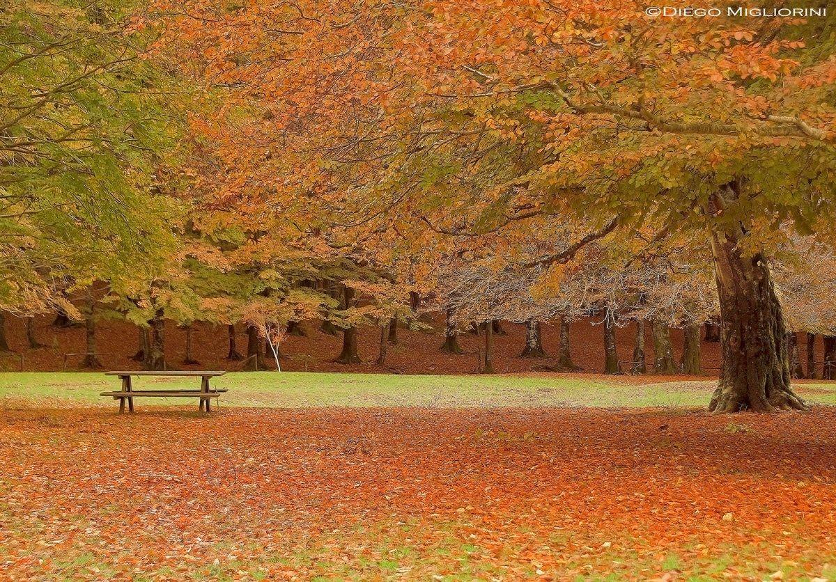 Autumn ......