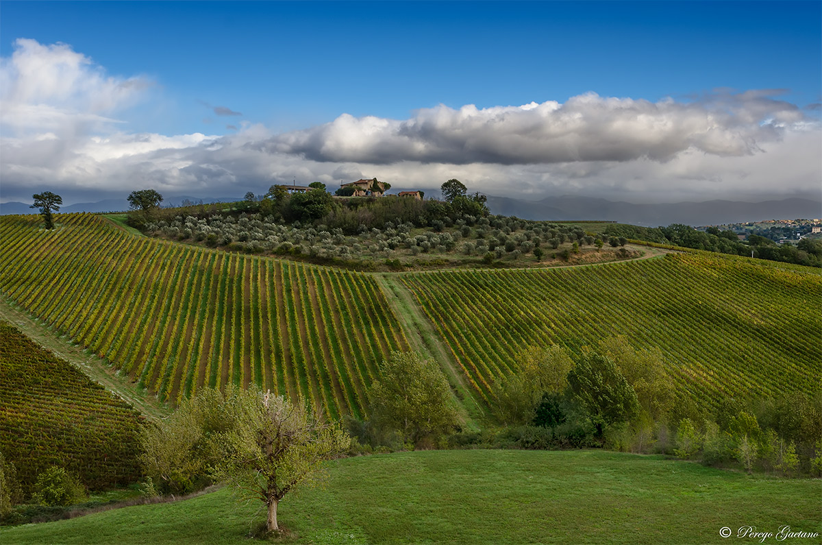 Vineyards and olive trees Umbrians 2...