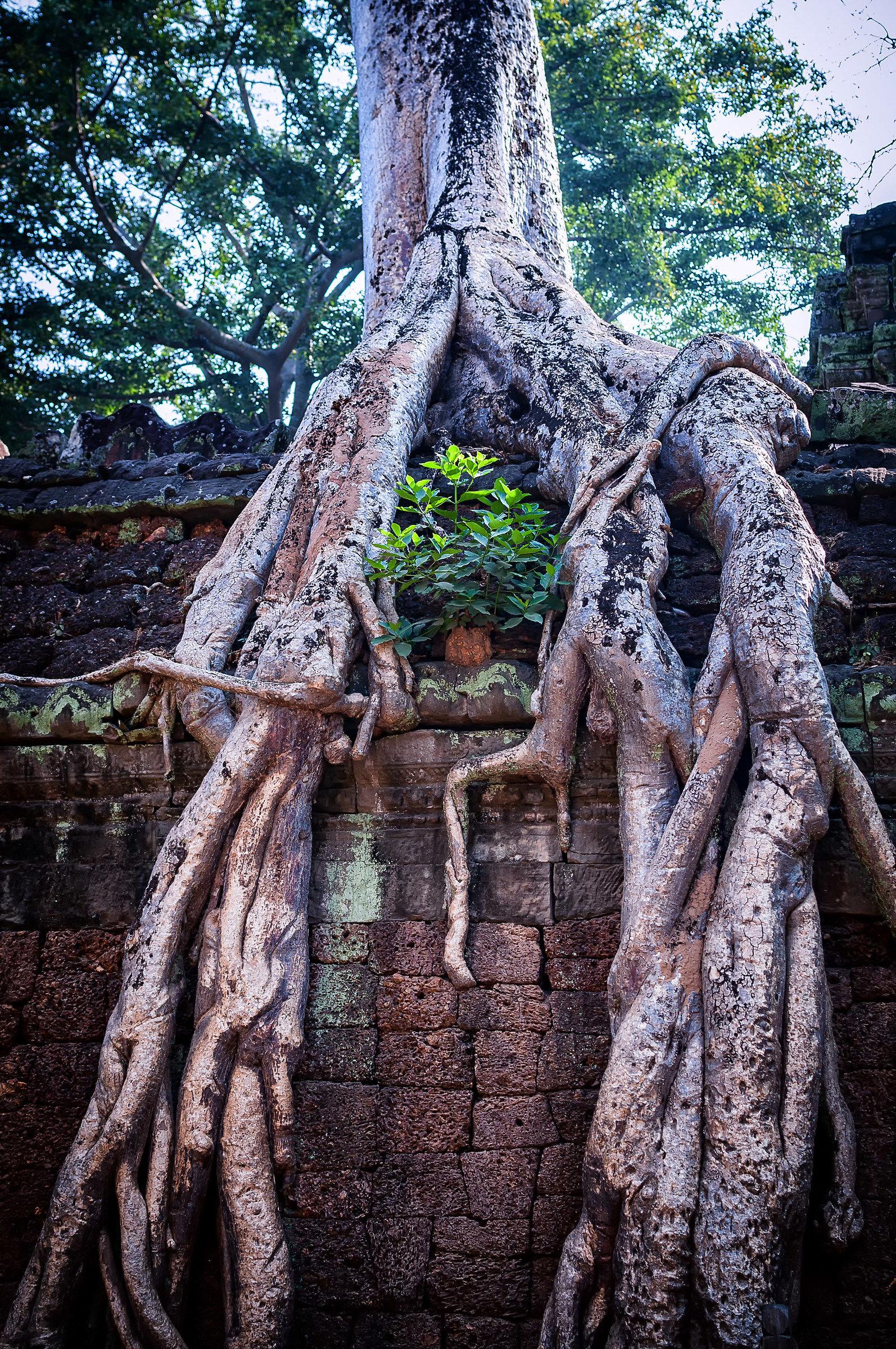 dettaglio Angkor...