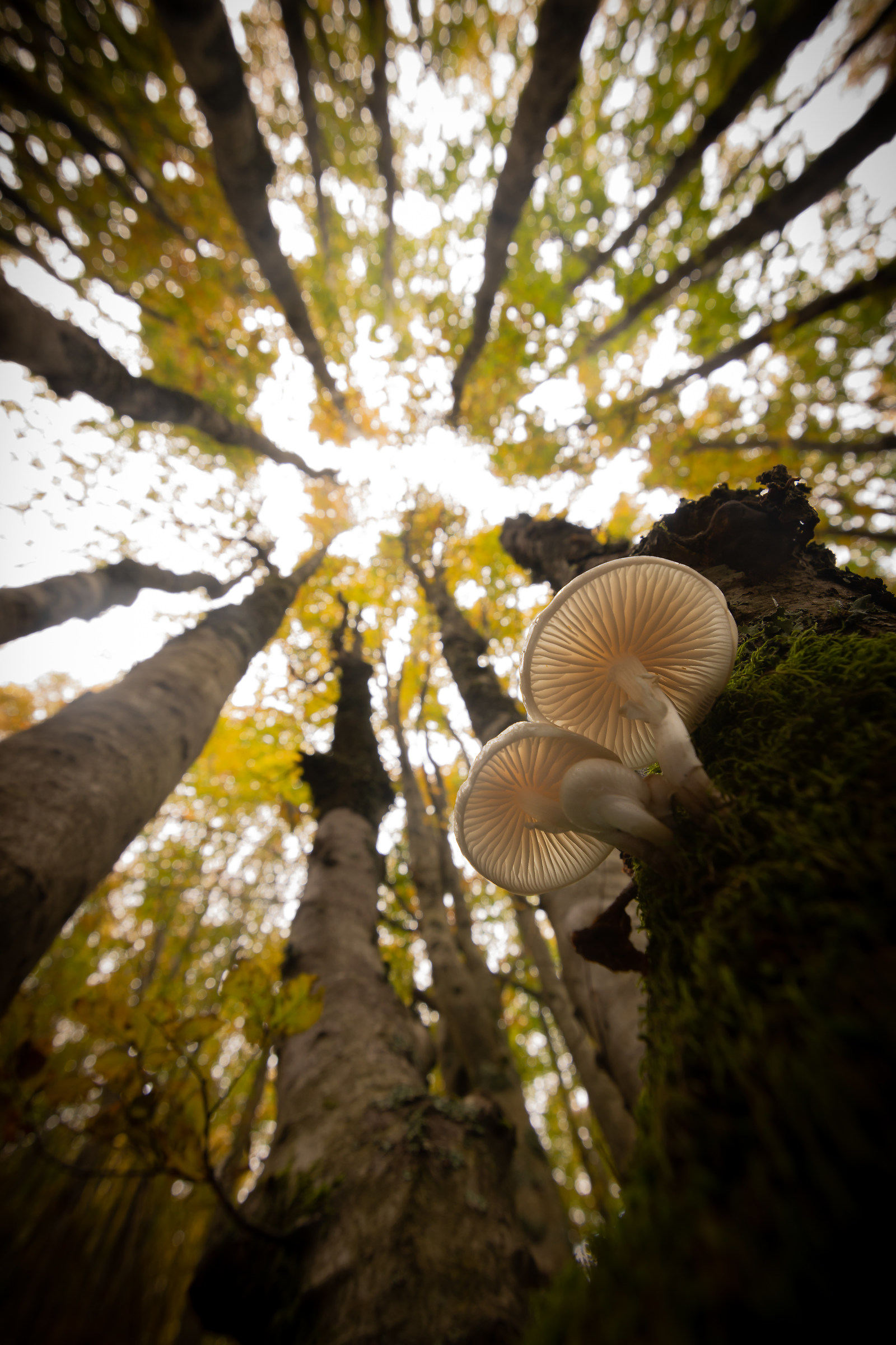 Mushrooms in Forest ...