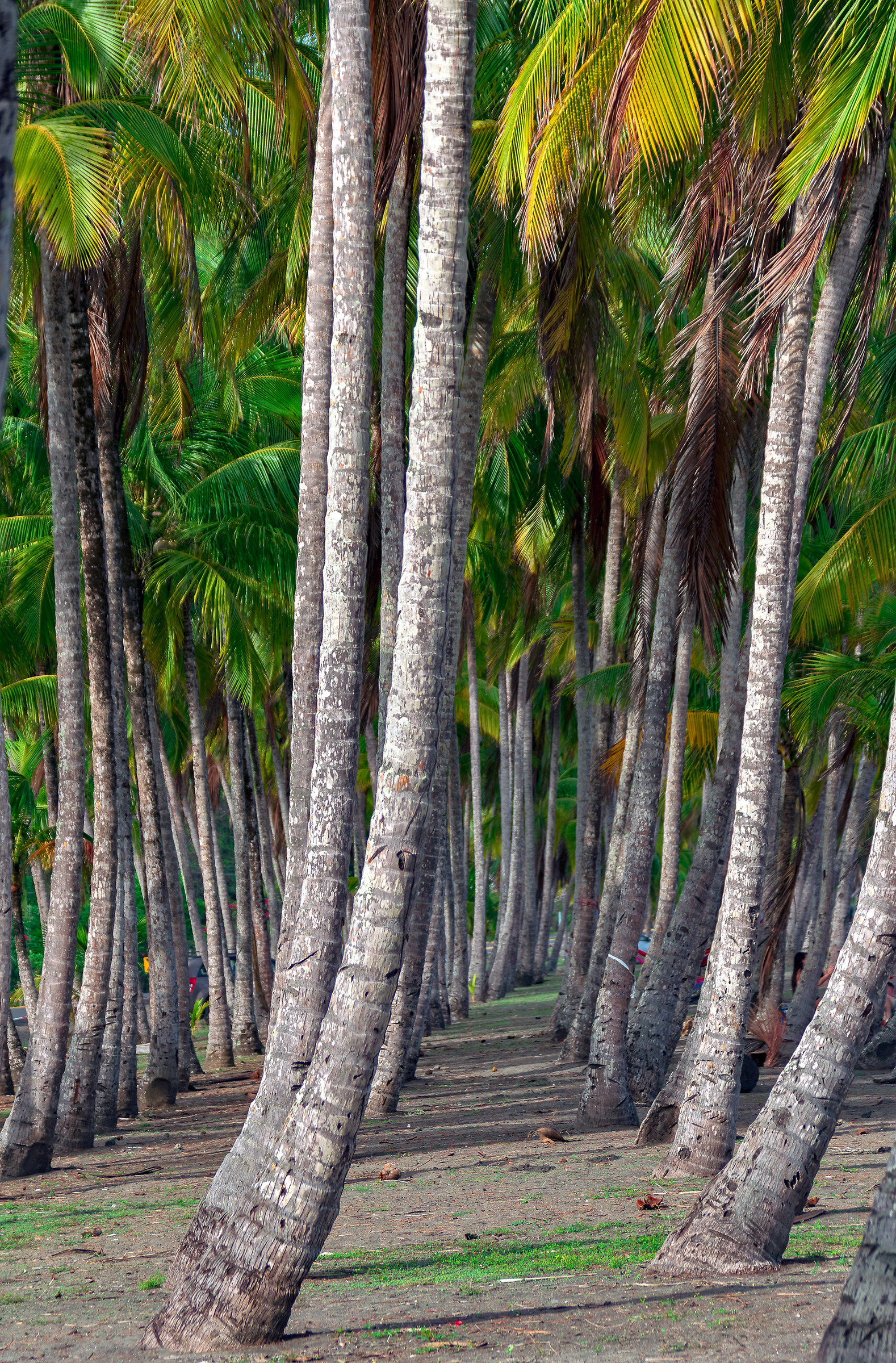 Palm trees...